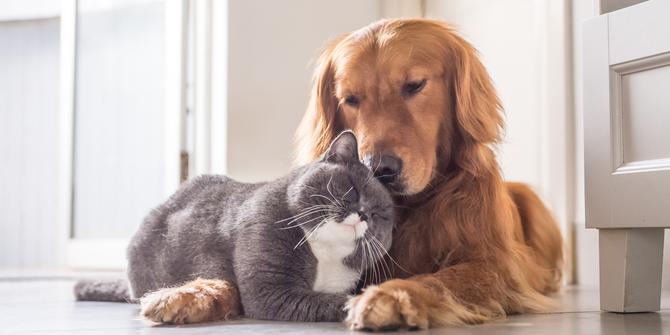 Zo maak je de ideale plek voor je huisdier in huis!