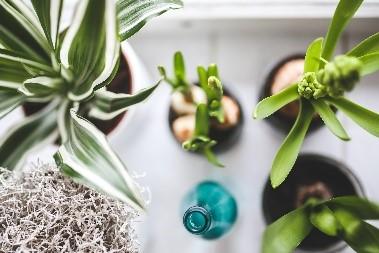 kamerplanten soorten in huis