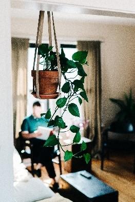beste kamerplanten soorten