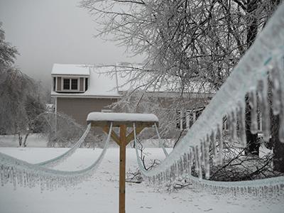 Bescherming vogels in de winter